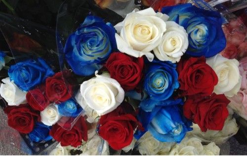 July 4th Roses
