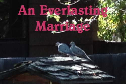 everlasting marriage