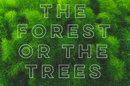 the forest or the trees
